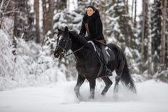 Caballo negro que corre en nieve en fondo del invierno imagenes de archivo