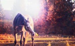 Caballo que come la ramita con las hojas sobre fondo de la naturaleza del otoño con los árboles Fotos de archivo libres de regalías