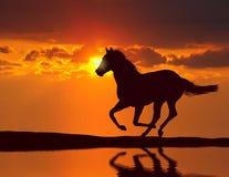 Caballo que corre durante puesta del sol Imagen de archivo libre de regalías