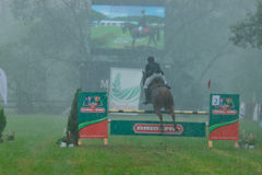 Caballo que corre en la lluvia una competencia de obstáculos Imagen de archivo
