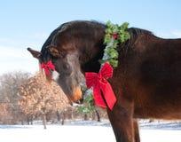Caballo que desgasta una guirnalda de la Navidad y un arqueamiento Fotos de archivo