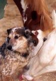 Caballo que lame el perro Fotografía de archivo libre de regalías