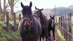 Caballo que lanza la cabeza cerca de otros caballos en prado, día de primavera almacen de metraje de vídeo