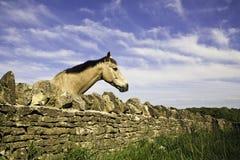 Caballo que mira sobre la pared de piedra seca Imagen de archivo libre de regalías