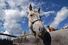 caballo que mira sobre la valla publicitaria 2 Fotos de archivo