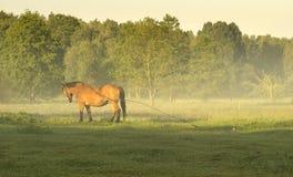 caballo que pasta en un prado Foto de archivo libre de regalías