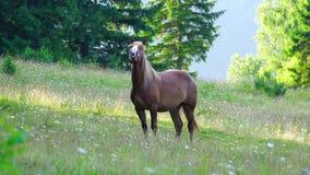 caballo que pasta en un prado almacen de metraje de vídeo