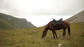 Caballo que pasta en un prado en las montañas almacen de metraje de vídeo