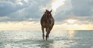 Caballo que recorre en la playa Fotos de archivo
