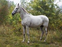 caballo que se coloca en el bosque en la hierba verde cerca de los árboles Imagen de archivo libre de regalías