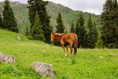 Caballo que se coloca en las montañas Foto de archivo