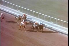Caballo que toma la ventaja durante carrera de caballos almacen de video