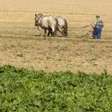 Caballo que trabaja en el campo Foto de archivo libre de regalías