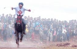 Caballo Racing Fotografía de archivo