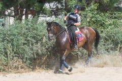 Caballo Racing Foto de archivo