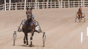 Caballo Racing Fotos de archivo libres de regalías