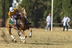 Caballo Rider Action de PoloCrosse Imagenes de archivo