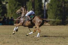 Caballo Rider Player Action de la Polo-cruz Fotos de archivo libres de regalías