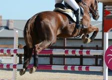 Caballo rojo del deporte que salta a través de obstáculo Demostración del caballo que salta en detalles Fotografía de archivo libre de regalías