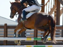 Caballo rojo del deporte que salta a través de obstáculo Demostración del caballo que salta en detalles Imagenes de archivo