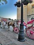 Caballo Rosa, pasarela en la ciudad animal. Hermoso caballo Rosa, hermosa ciudad de Mérida, paseo en ciudad animal royalty free stock photo