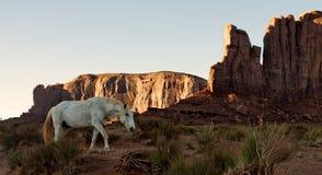 Caballo salvaje del mustango que esmalta en desierto Fotografía de archivo