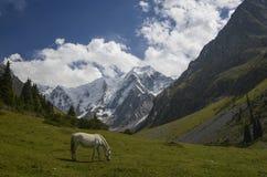 Caballo salvaje en las montañas Foto de archivo libre de regalías