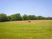 Caballo solo en el campo rural Imagenes de archivo