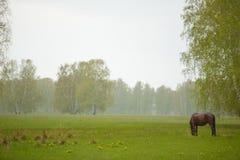 Caballo solo en el prado en la luz pasada de la puesta del sol colorida tranquila de la primavera foto de archivo libre de regalías