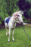 Caballo vestido como unicornio con el cuerno Ideas para el photoshoot boda Partido outdoor fotos de archivo