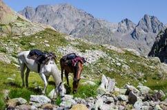 A caballo viaje en las montañas Imagen de archivo libre de regalías