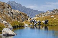 A caballo viaje en las montañas Imagenes de archivo