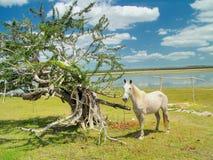 Caballo y árbol imagen de archivo