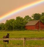 Caballo y arco iris Imagen de archivo libre de regalías