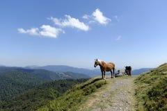 Caballo y burro del trabajo en las montañas Foto de archivo