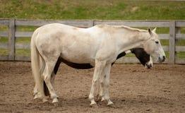Caballo y caballo Foto de archivo