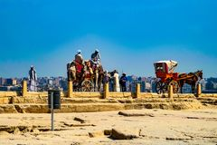 Caballo y carro, Giza, El Cairo imagen de archivo libre de regalías