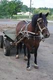 Caballo y carro que se colocan en el camino Foto de archivo