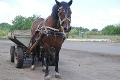 Caballo y carro que se colocan en el camino Imagen de archivo