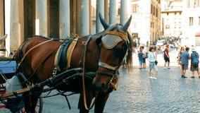 Caballo y carro que transportan a turistas en el cuadrado del panteón, Roma almacen de metraje de vídeo