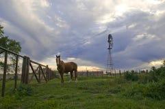 Caballo y cielo Foto de archivo libre de regalías