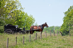 Caballo y cochecillo de Amish fotos de archivo libres de regalías