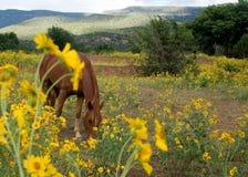Caballo y flores Imagen de archivo libre de regalías