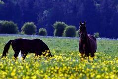 Caballo y flores amarillas Foto de archivo