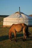 Caballo y Ger Terelj Mongolia Asia central imagenes de archivo