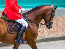 Caballo y jinete del Dressage Retrato del caballo del hestnut del ¡de Ð durante la competencia de la doma Imagenes de archivo