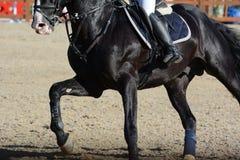 Caballo y jinete negros del deporte en galope Demostración del caballo que salta en detalles Fotografía de archivo