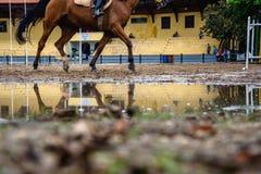 Caballo y reflextion en un charco durante una sesión del equestriani imagen de archivo libre de regalías