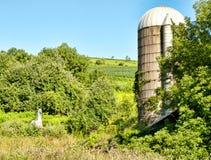 Caballo y silo Foto de archivo libre de regalías