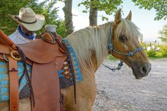 Caballo y vaquero foto de archivo